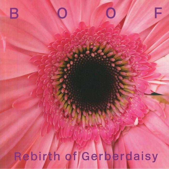 Rebirth Of Gerberdaisy