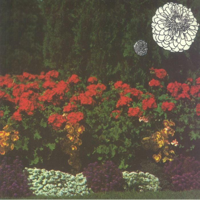 Imaginary Softwoods Annual Flowers In Color